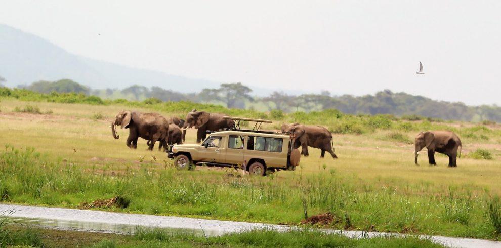 Ngorongro Crater