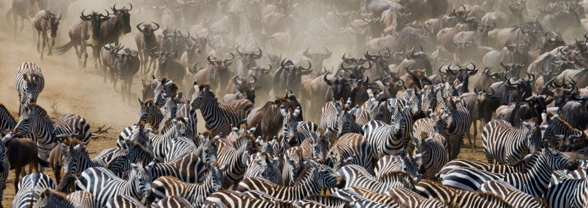 Serengeti Safari Tour